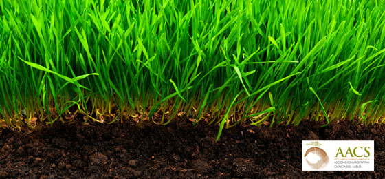 healthy-turf-and-soil1
